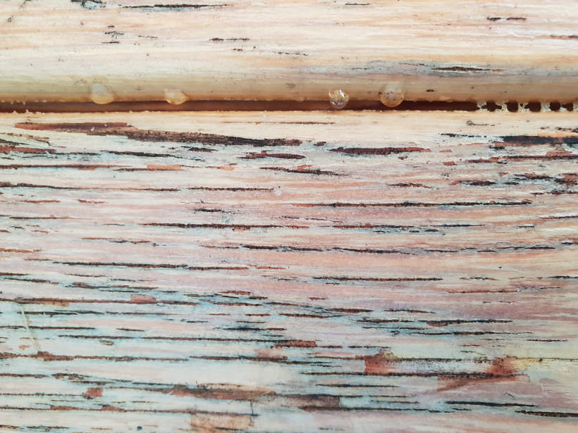 Relativ 🥇】Holzversiegelung für Außen gesucht? Jetzt meinen Ratgeber lesen! HR73